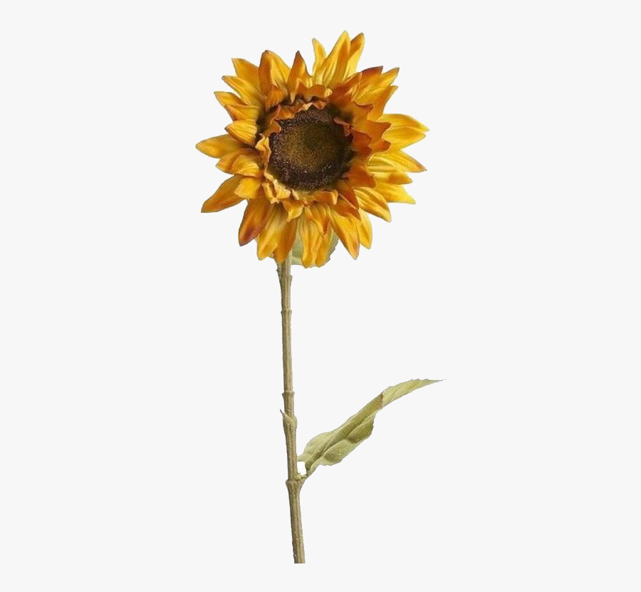 Tumblr Yellow Png - Aesthetic Sunflower Tumblr Png, Transparent Clipart