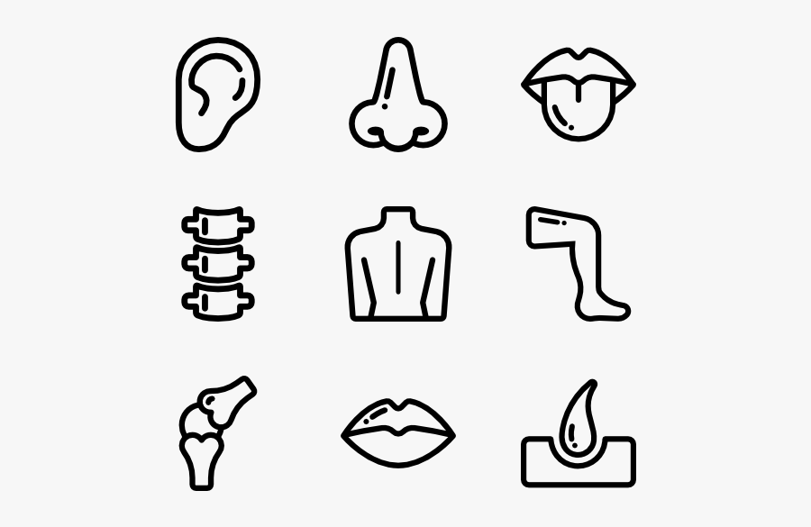 Human Body Outline - Human Body Parts Icon, Transparent Clipart