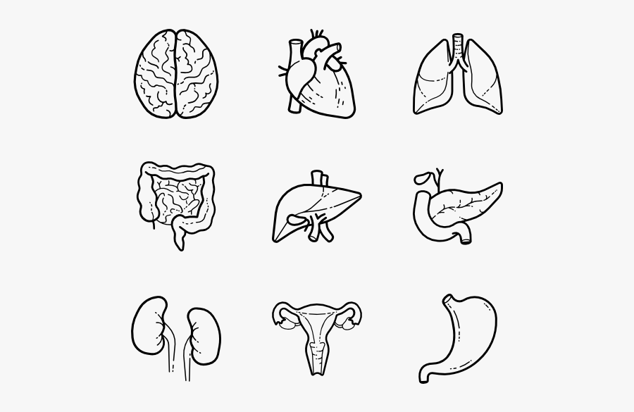 Human Organs Icon Png, Transparent Clipart