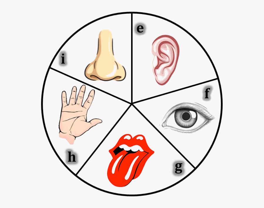 Transparent Tongue Clipart - Human Body 5 Sense Organs, Transparent Clipart