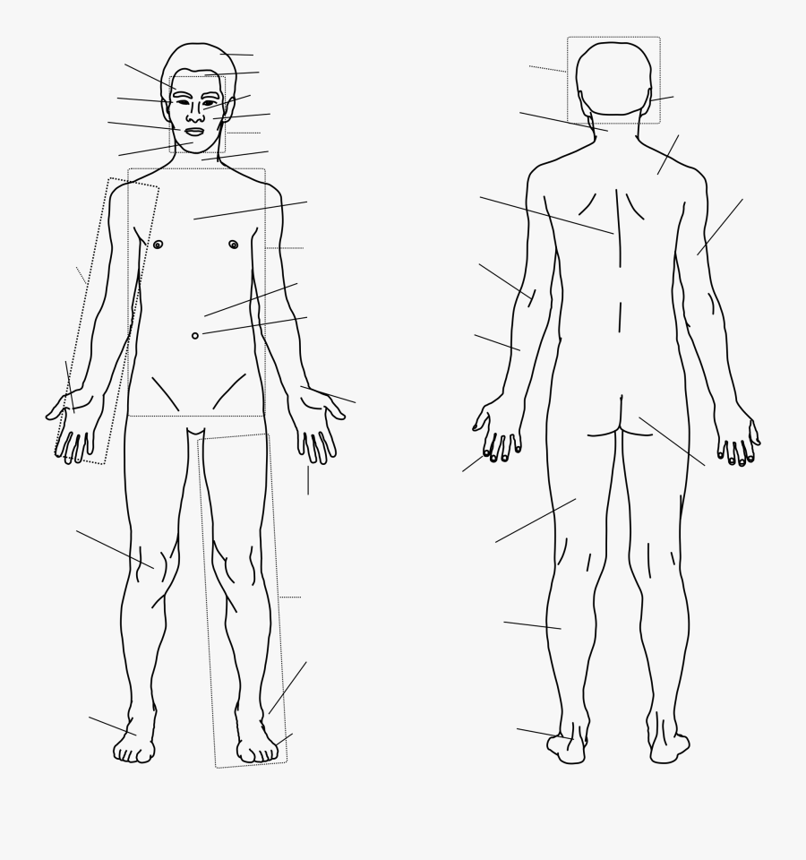 Clip Art File With Labels Svg - Back Of Body Labels, Transparent Clipart