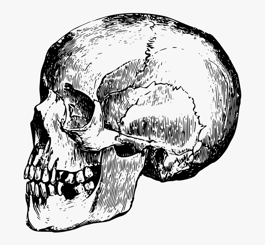Head,skull,monochrome Photography - Png Bone Human Skull, Transparent Clipart
