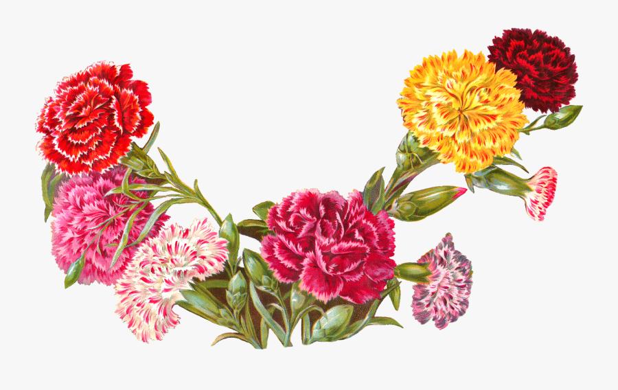 Old Botanical Art Carnation Illustration Digital Banner - Carnation Border Clip Art, Transparent Clipart