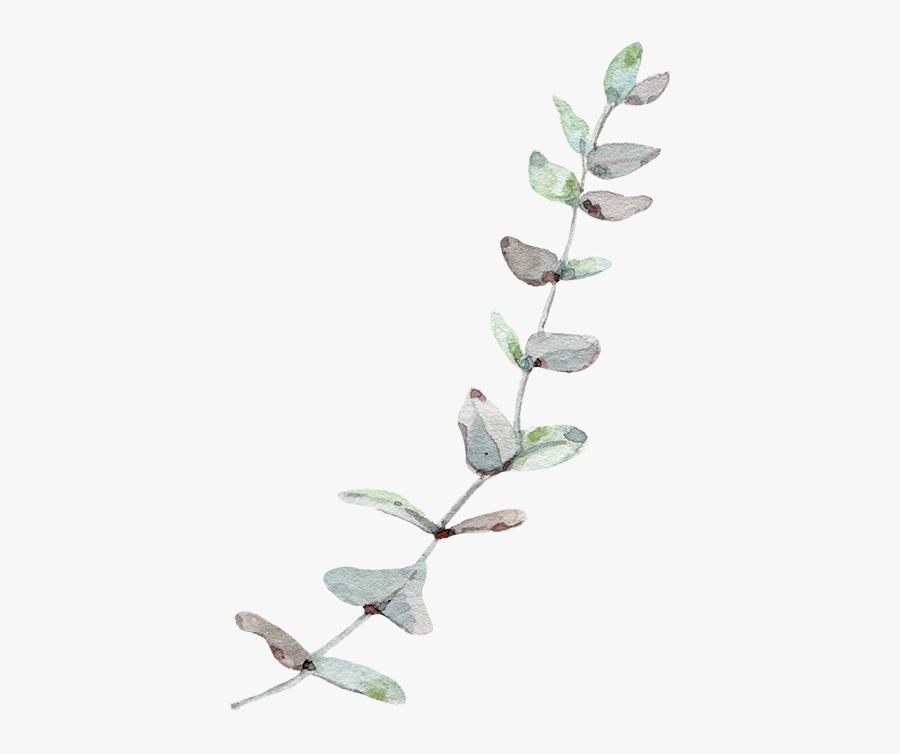 Eucalyptus Leaf Leaves Trees Gum Wind Nordic Clipart - Eucalyptus Leaves Transparent Background, Transparent Clipart