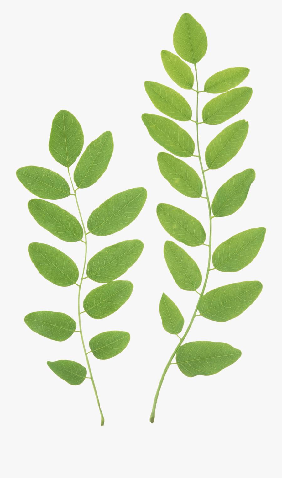 Collection Of Transparent - Green Leaf Transparent Background, Transparent Clipart