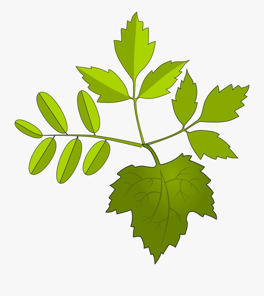 ใบไม้ กราฟ ฟิ ค, Transparent Clipart