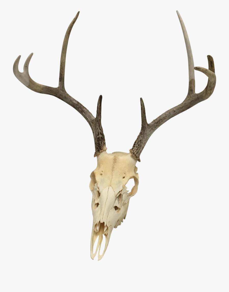 Clip Art Natural Point White Tail - Deer Skull Transparent Background, Transparent Clipart
