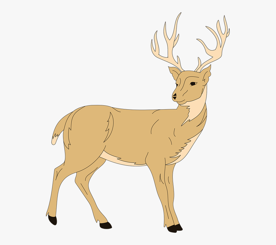 Forest Animal Free Vector - Clip Art Of Deer, Transparent Clipart