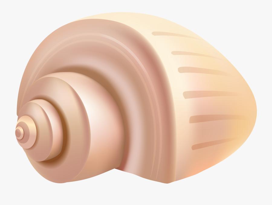 Shell Clipart Summer - Shell Clipart Png, Transparent Clipart