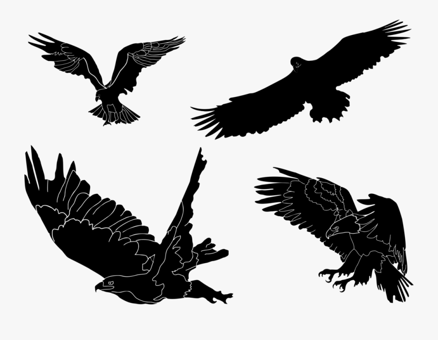 Eagle,wildlife,hawk - Clip Art, Transparent Clipart