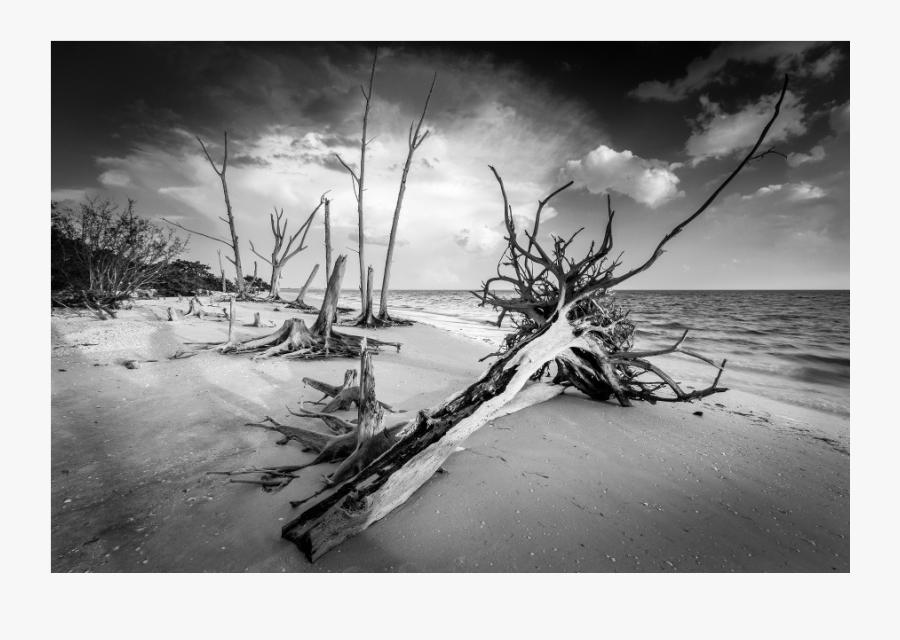 Clip Art Black And White Photography Nature - Monochrome, Transparent Clipart