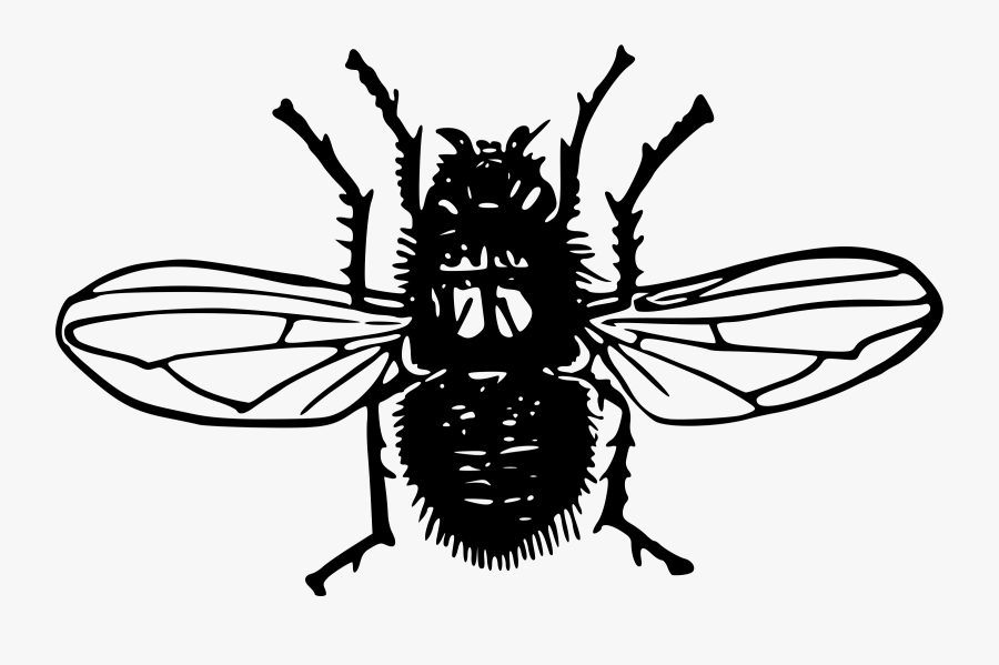 Monochrome - Fly, Transparent Clipart