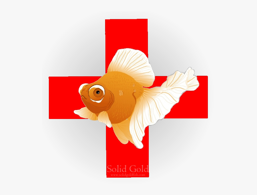 Fish First Aid, Transparent Clipart