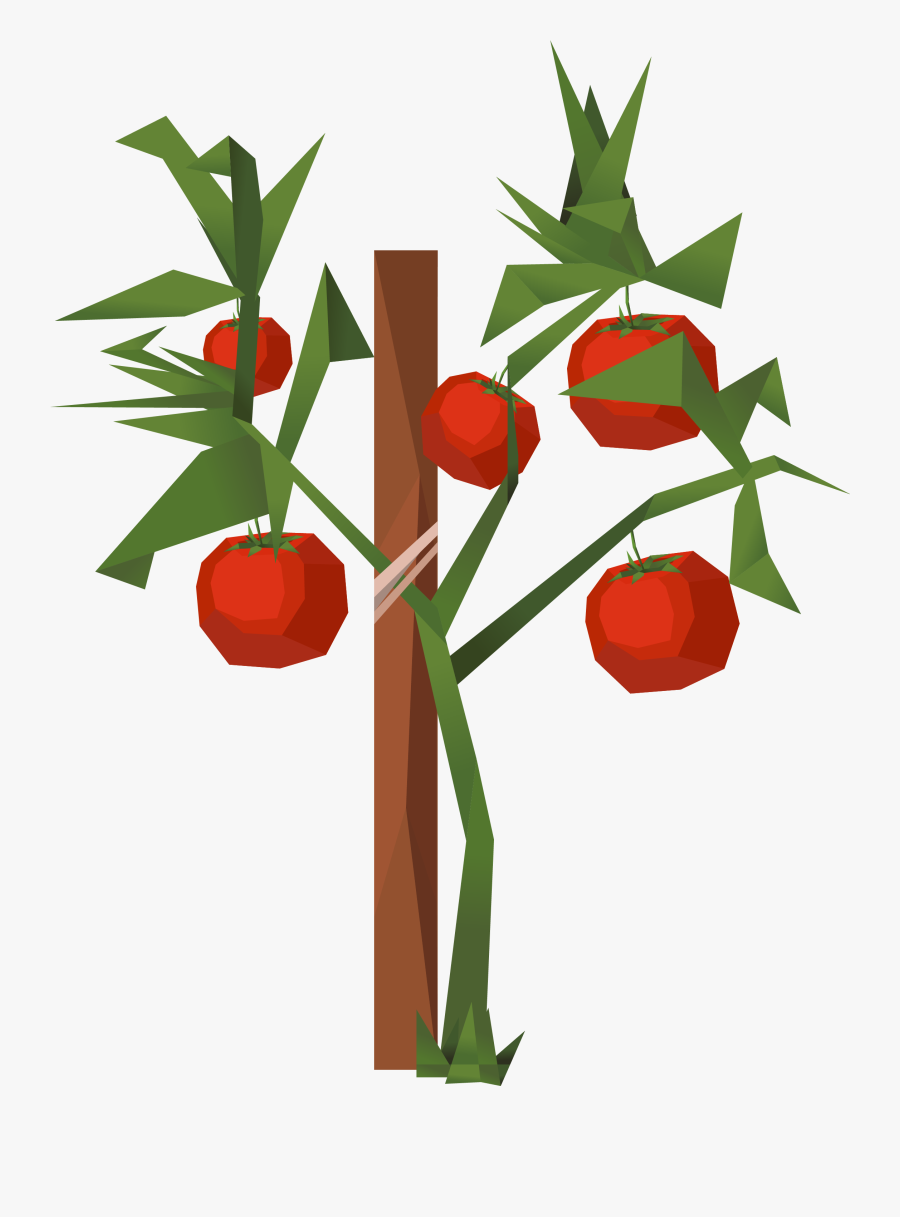 Tomato Clip Art - Clip Art, Transparent Clipart