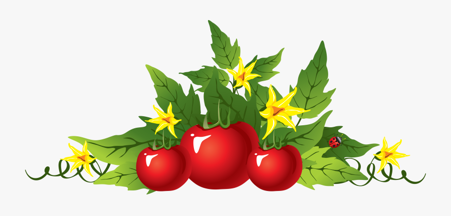 Tomatoes Clipart Drawing - Tomato Vines Clip Art, Transparent Clipart