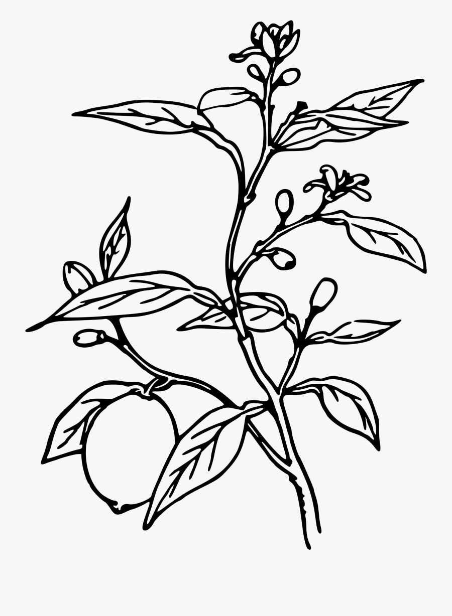 Trees Black And White Drawing At Getdrawings - Plant Black And White, Transparent Clipart