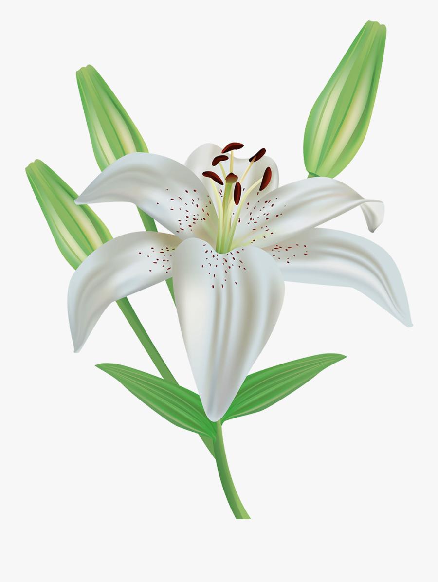 Clip Art Lily Flower Clipart - White Lily Flower Clipart, Transparent Clipart