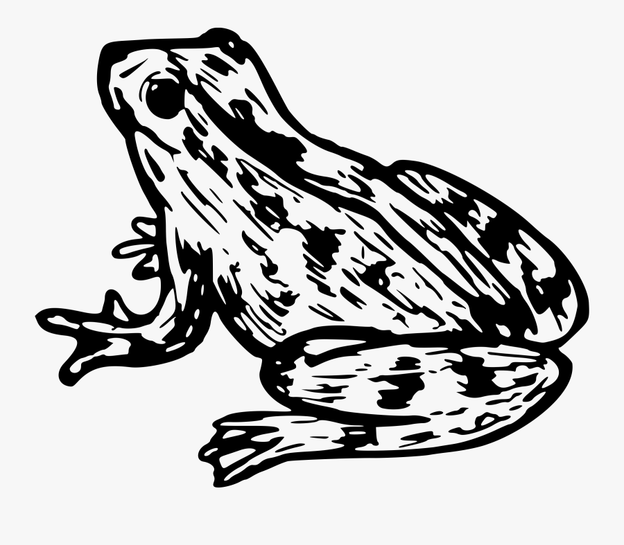 Frog 9 Png Royalty Free Stock - Clipart Cane Toad, Transparent Clipart