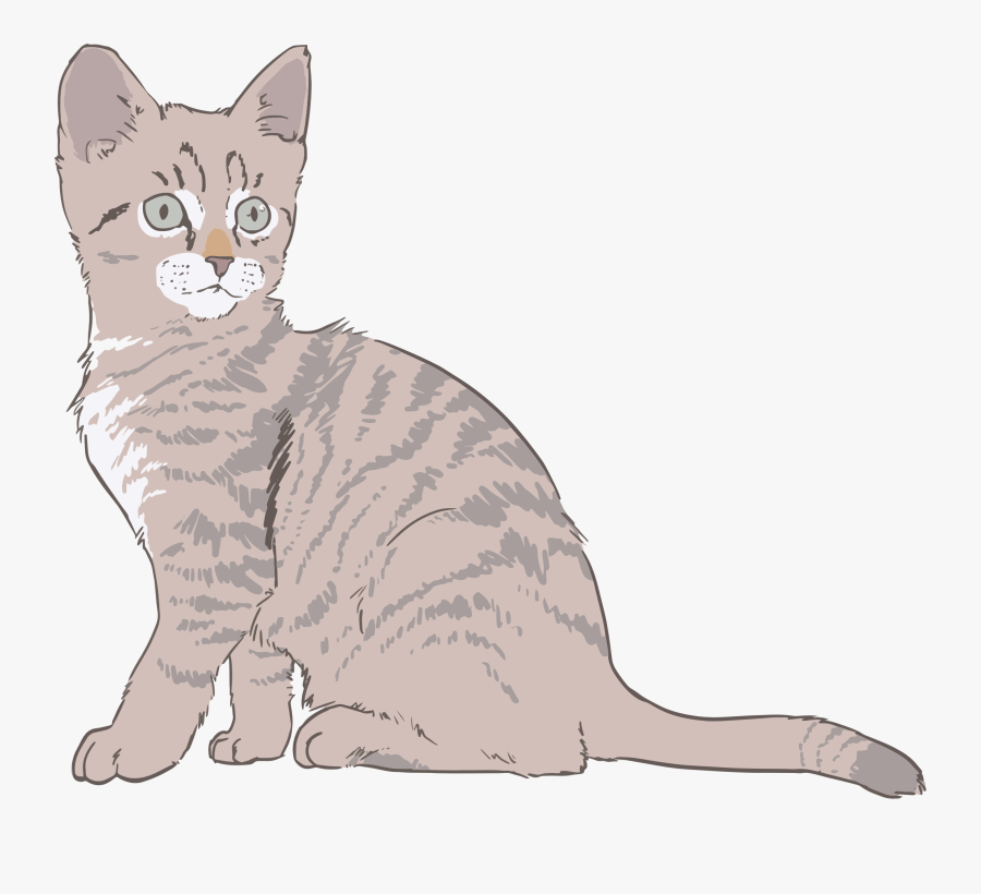 Kitten Line Art Colored - Cat Drawing With Color, Transparent Clipart