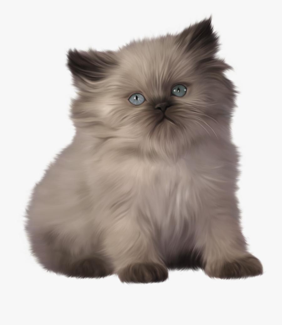 Kitten Png Clipart - Ragdoll Himalayan Persian Cat, Transparent Clipart