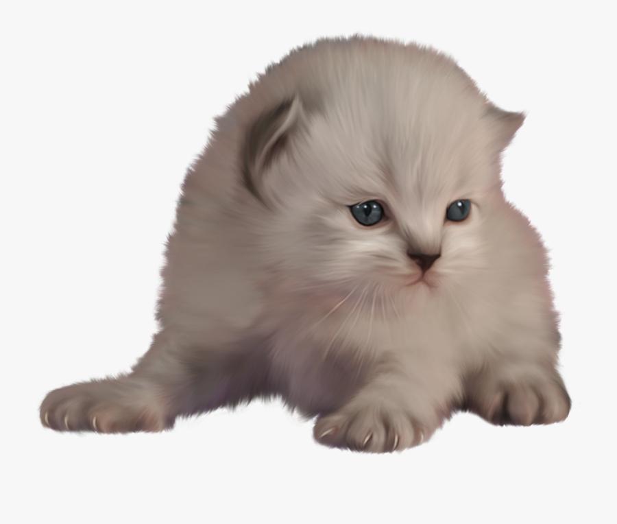 Kitten Png Clip Art - Cat, Transparent Clipart