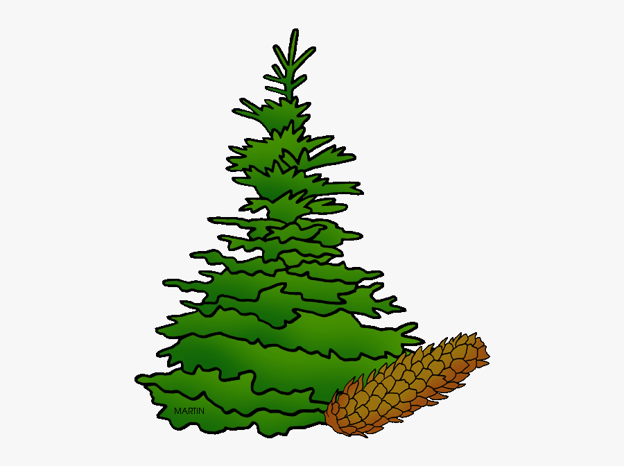 State Tree Of South Dakota - Black Hills Spruce South Dakota, Transparent Clipart