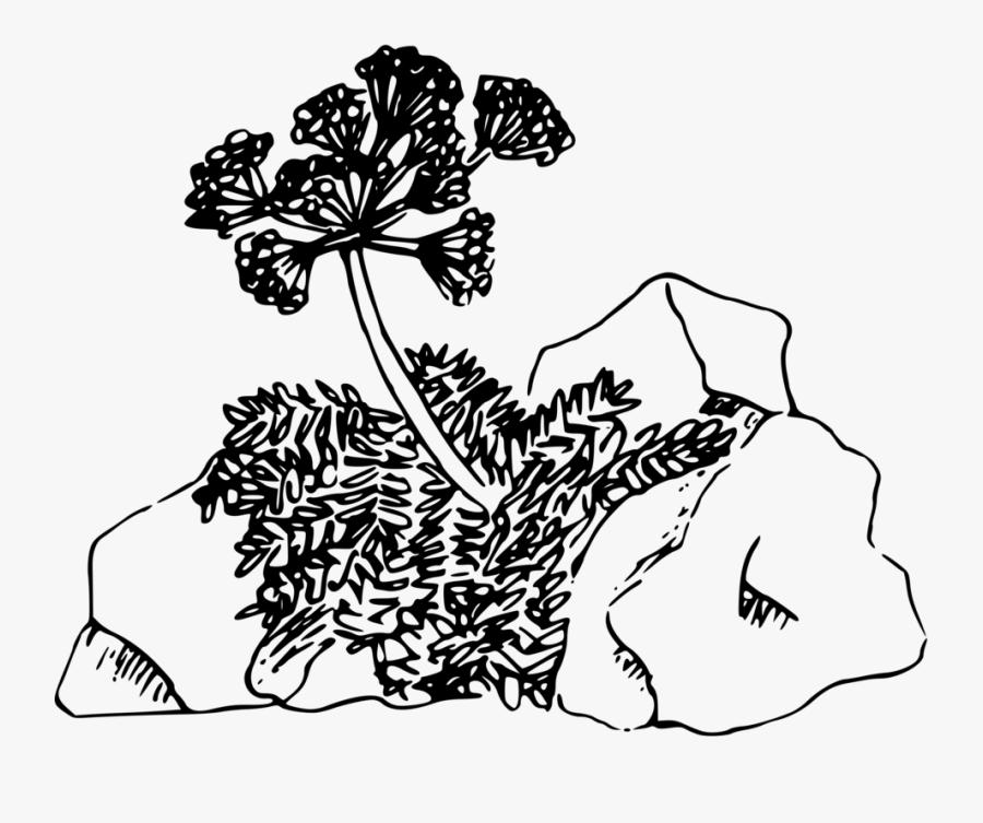 Art,monochrome Photography,artwork - Desert Plants Line Art, Transparent Clipart