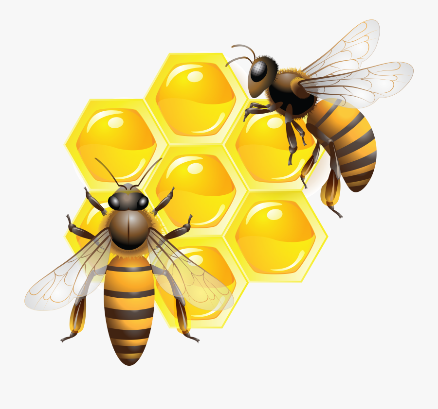 Honey Bee Clip Art - Transparent Background Honey Bee Png, Transparent Clipart