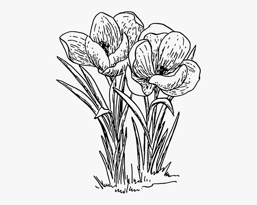 Transparent Bouquet Clipart Black And White - Flower Drawing Png Transparent, Transparent Clipart