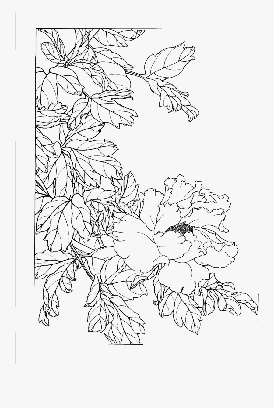Sketch Flower Chinese Peony Painted Gongbi Line Clipart - Png Sketch Flower, Transparent Clipart
