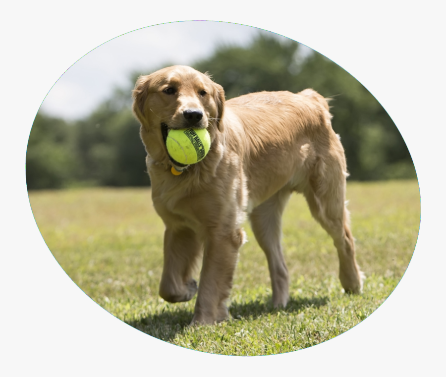 Happy Dogs With Tennis Balls, Transparent Clipart