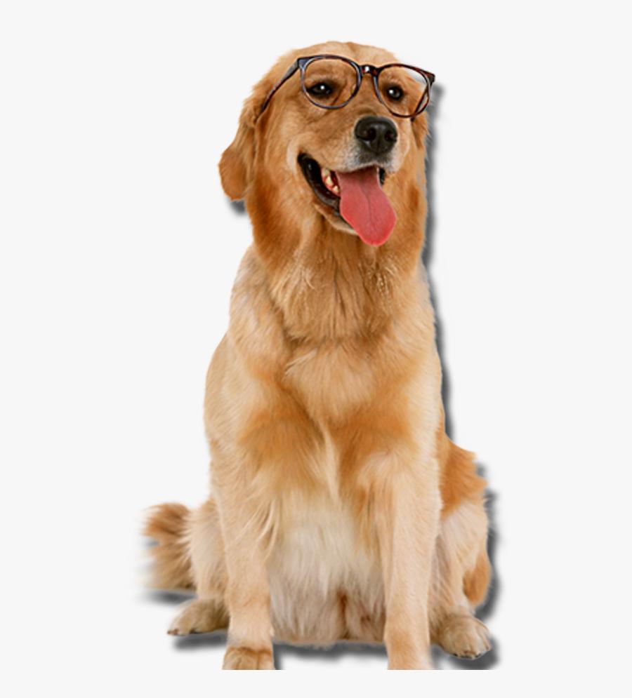 Dog With Glasses Transparent, Transparent Clipart