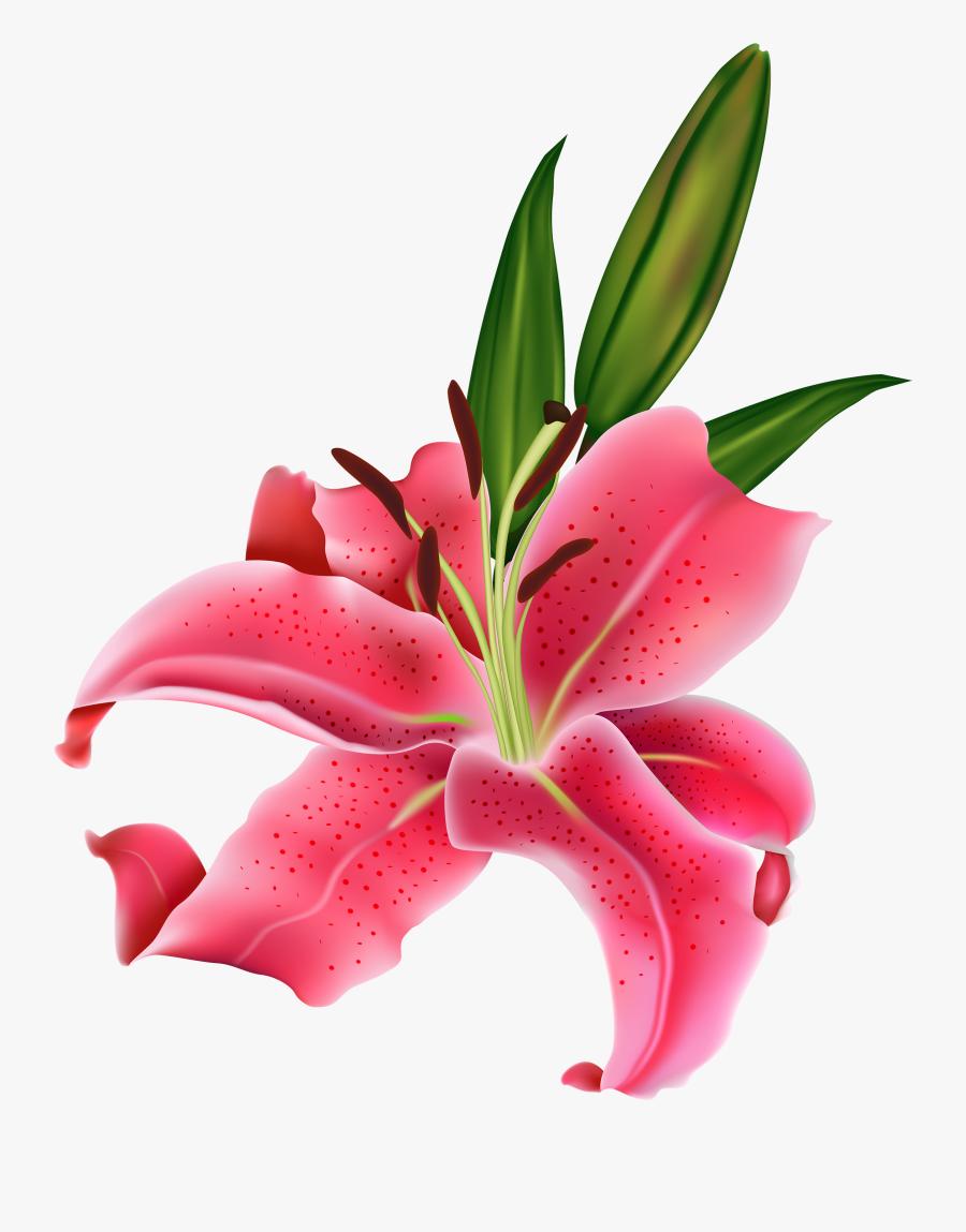 Clipart Flowers Clipart - Calla Lily Lilies Flower Png, Transparent Clipart