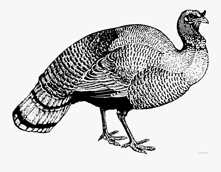Graphic Wild Turkey Clipart Black And White - Clip Art ... (900 x 700 Pixel)