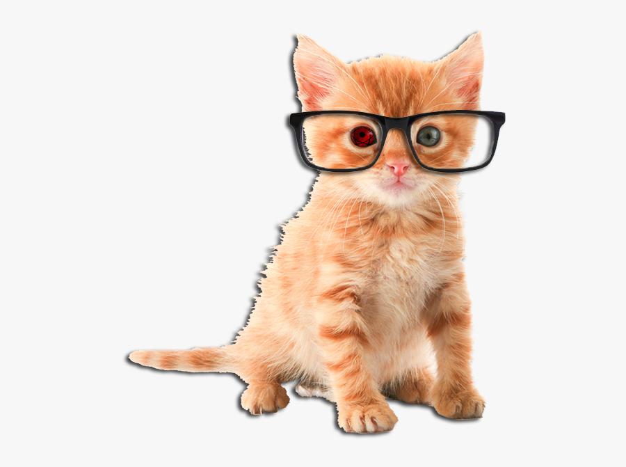 Cat Png Kittens - Orange Cute Tabby Kittens, Transparent Clipart