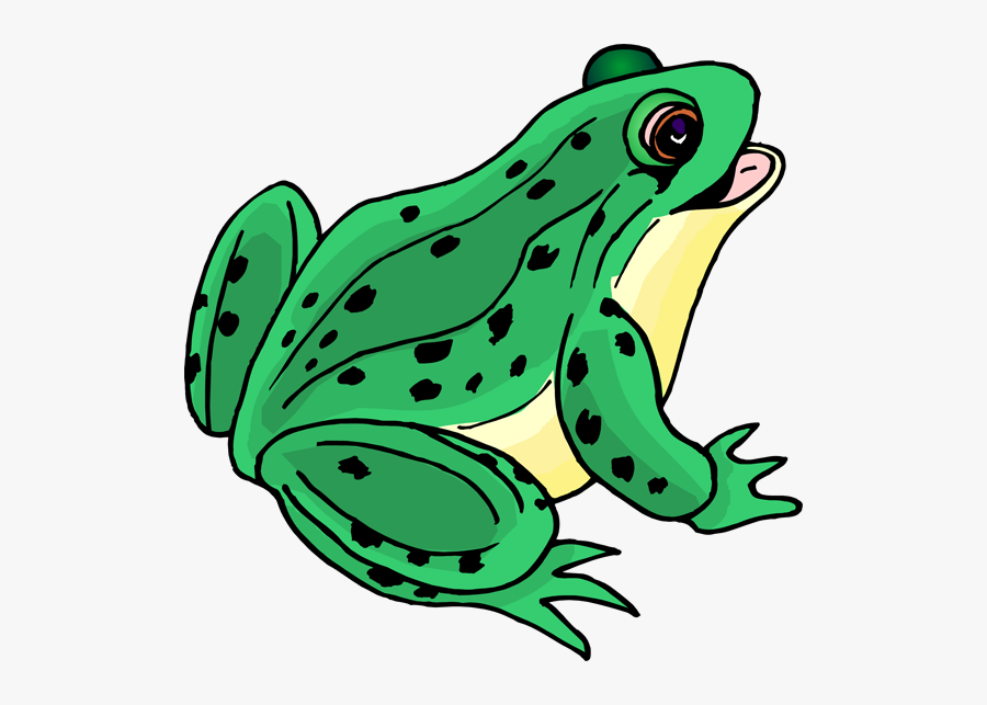 Clip Art Picture Of A Frog - Clipart Picture Of A Frog, Transparent Clipart