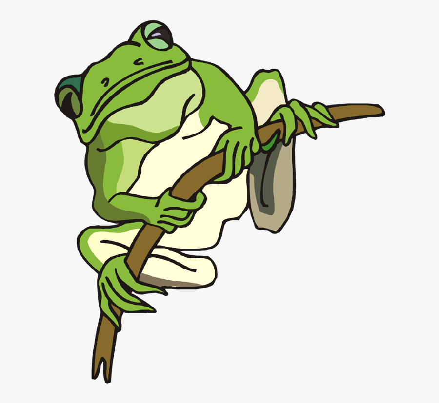 Free Frog Clipart - Tree Frog Coloring Page, Transparent Clipart