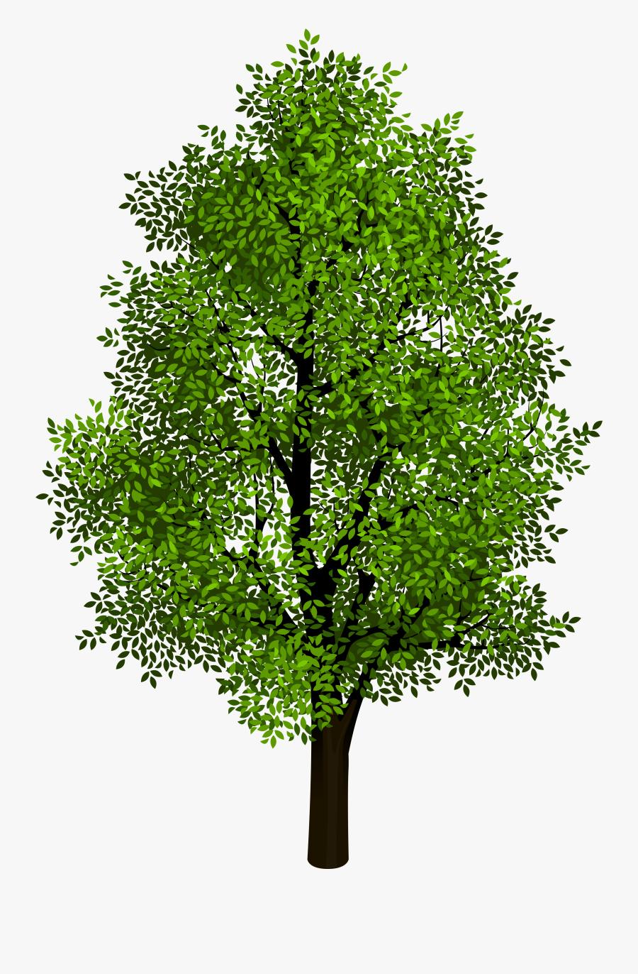 Transparent Airplane Clipart No Background - Tree Without A Background, Transparent Clipart