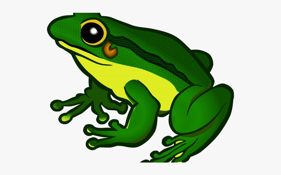 Poison Dart Frog Clipart Transparent Background - Clipart Frog, Transparent Clipart