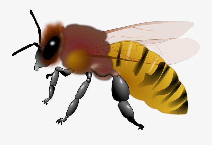 Free Clip Art Honey Bee - Bee Clip Art Honey, Transparent Clipart