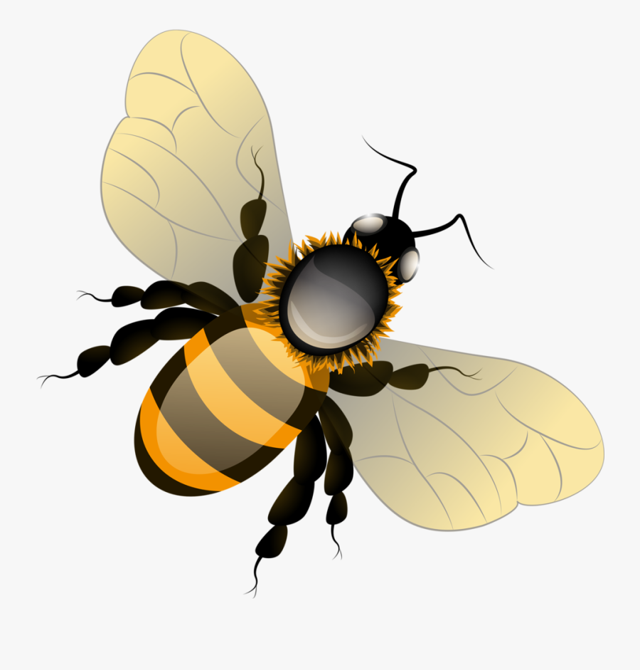 Фотки Bee Clipart, Bees, Clip Art, Illustrations - Honey Bee Png, Transparent Clipart