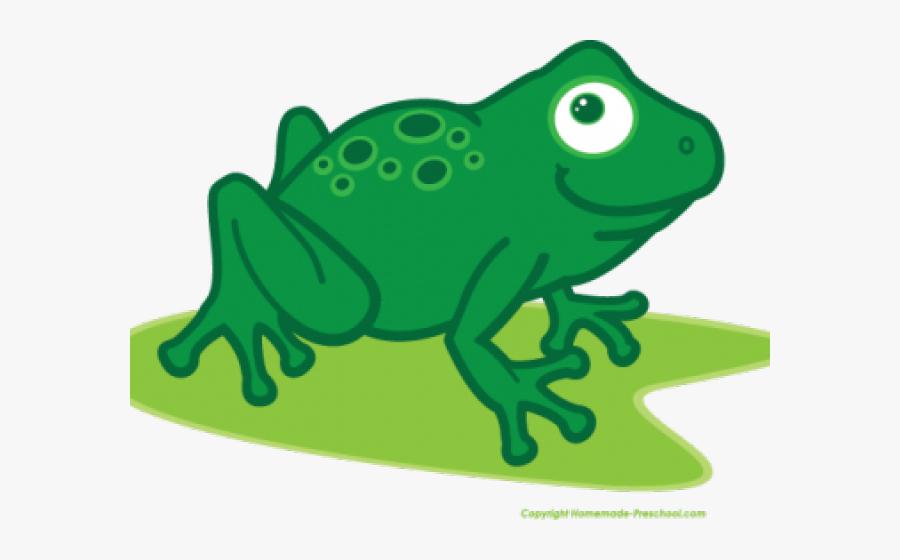 Transparent Frog Clipart - Drawing, Transparent Clipart