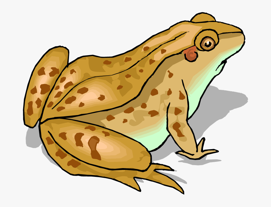 Red Eyed Tree Frog Clipart - Toad Clip Art, Transparent Clipart