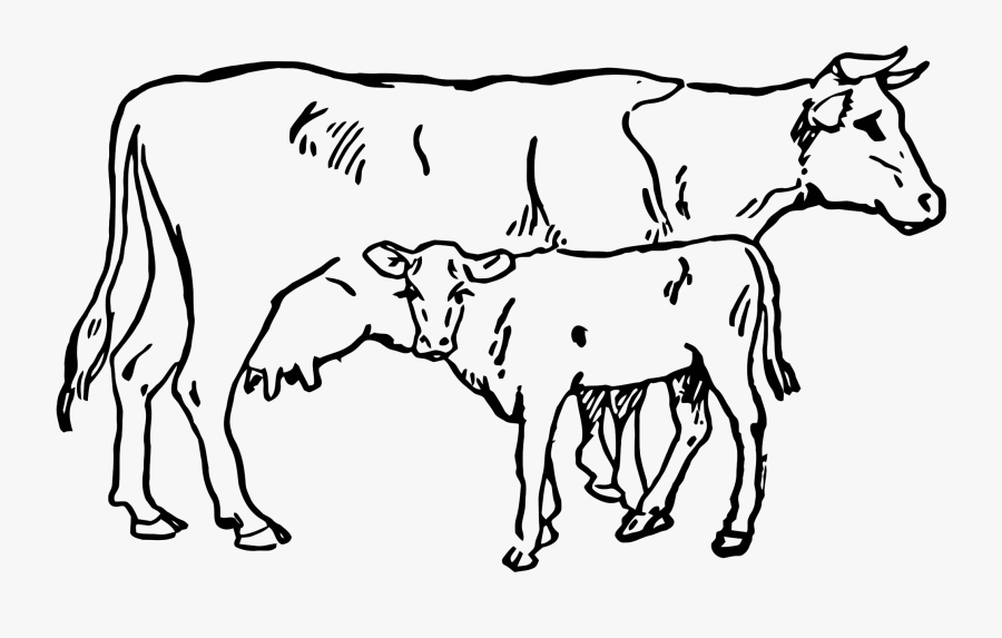 Collection Of Free Cows Drawing Calf Download On Ui - Cow And Calf Drawing, Transparent Clipart