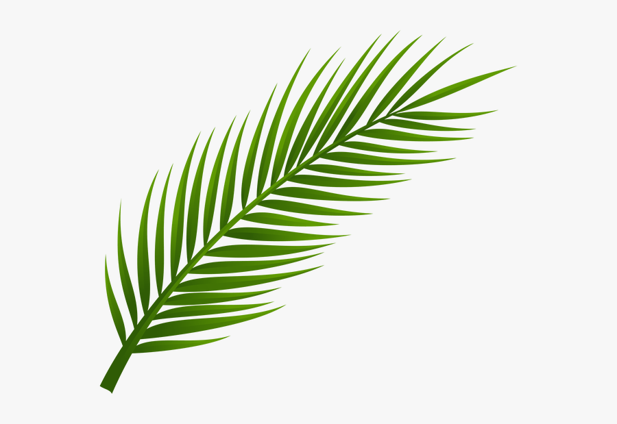 Palm Tree Clip Art, Palm Tree Drawing, Leaf Drawing, - Transparent Background Palm Leaf Png, Transparent Clipart