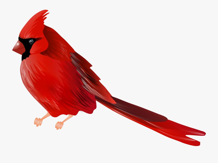 Clip Art Free Clip Art Cardinal Bird Red Bird Png Free Transparent Clipart Clipartkey