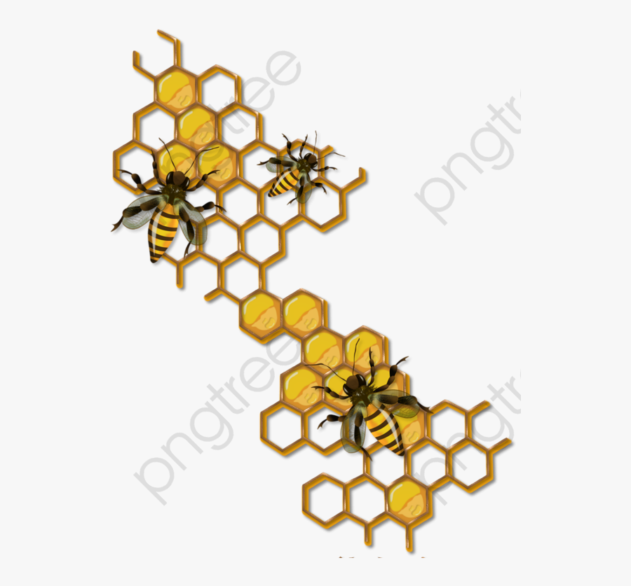 Bee Clipart Honey Bees - Honey Bee Honeycomb Drawing, Transparent Clipart