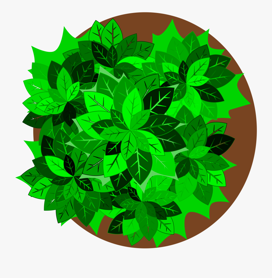 Plant,leaf,tree - Tree Plant Top Png, Transparent Clipart