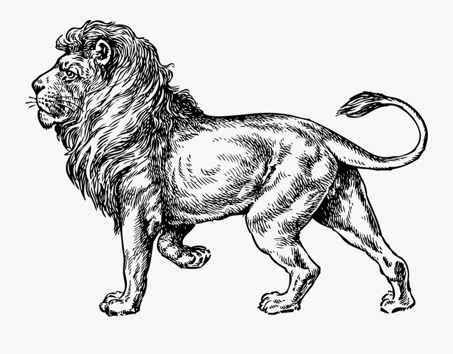 Transparent Lion Clipart - Walking Lion Drawing, Transparent Clipart