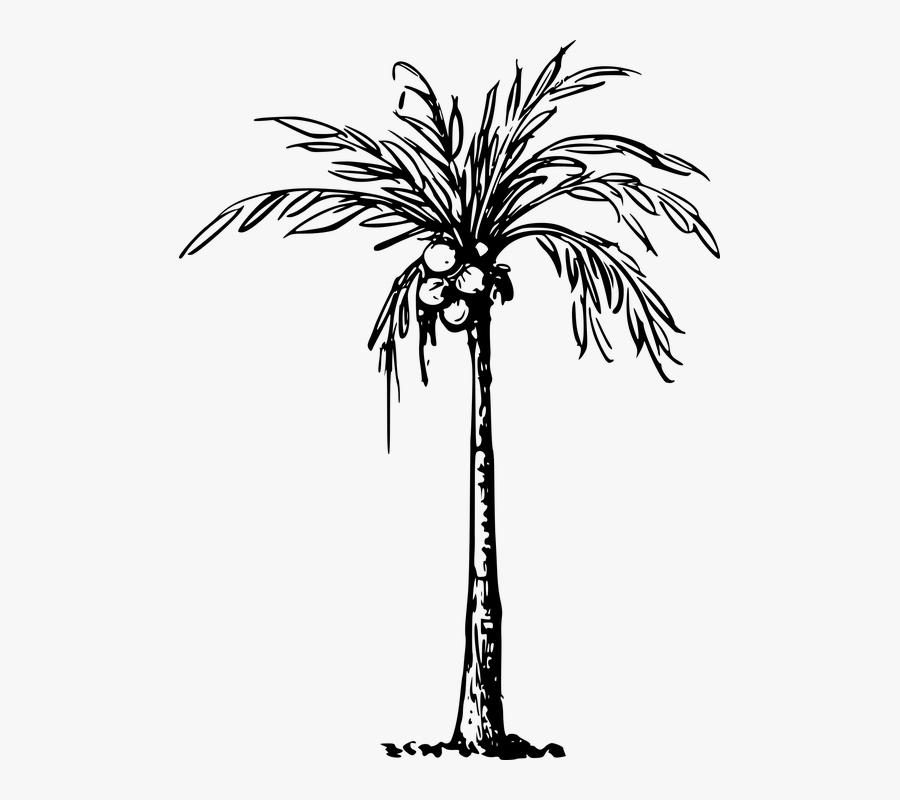 Transparent Cartoon Palm Tree - Clip Art Of Coconut Tree, Transparent Clipart